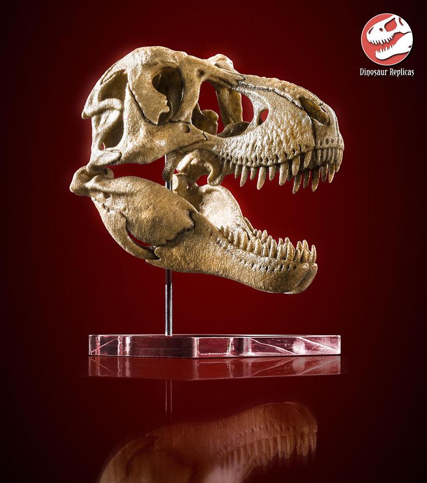 [Image: skull_rex_deviant_01a_by_strick67-dcnfhgm.jpg]