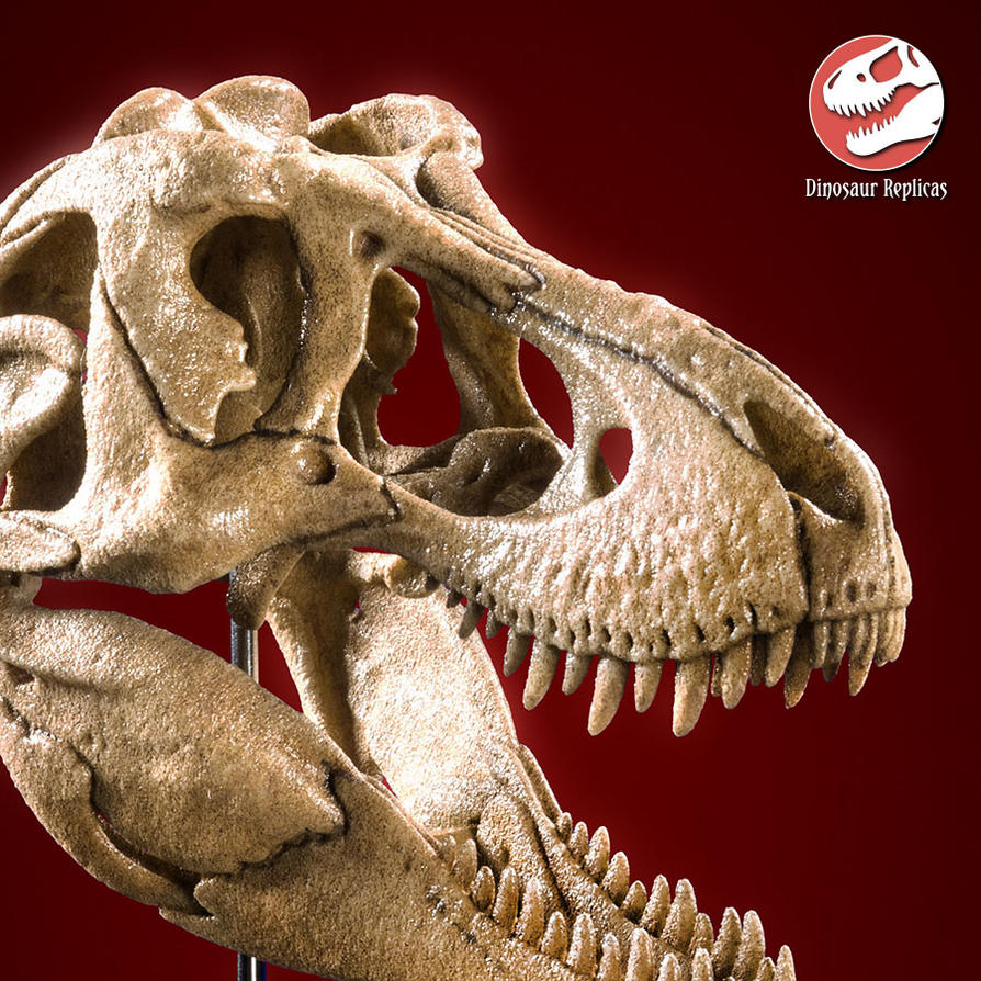 [Image: skull_rex_deviant_02a_by_strick67-dcnfitu.jpg]