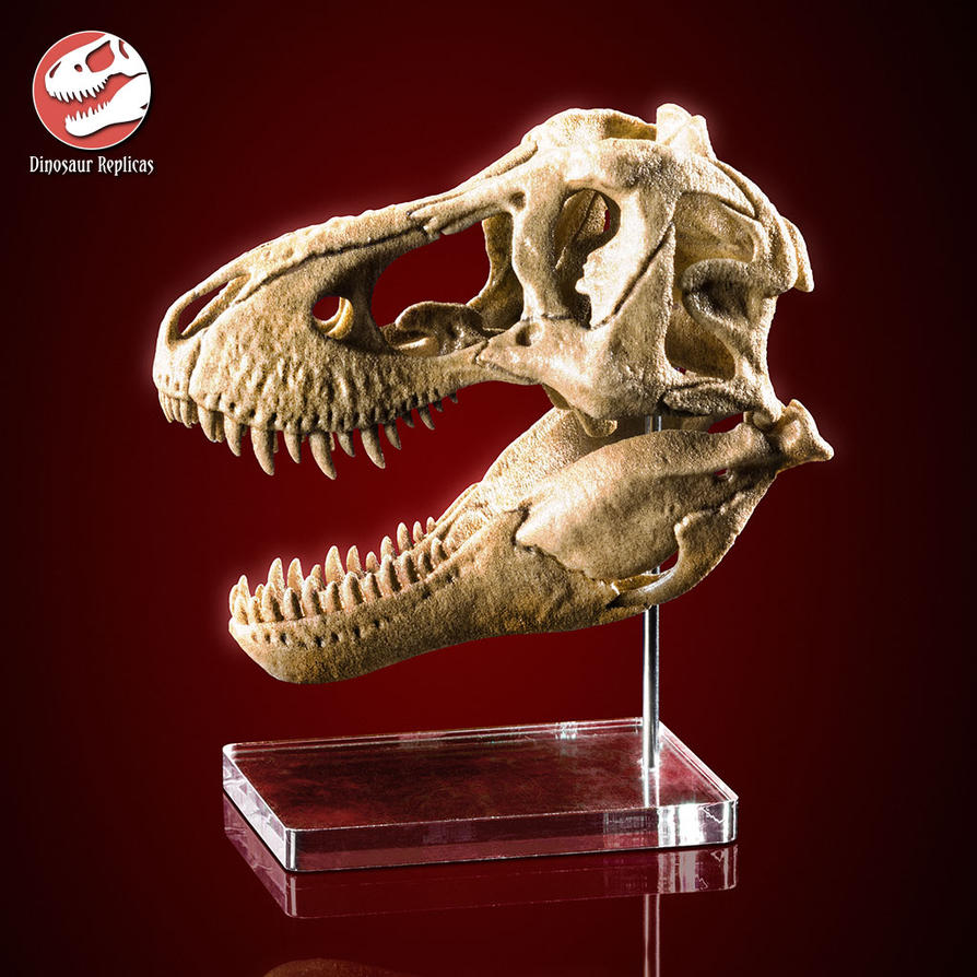 [Image: skull_rex_deviant_03a_by_strick67-dcnfj9p.jpg]