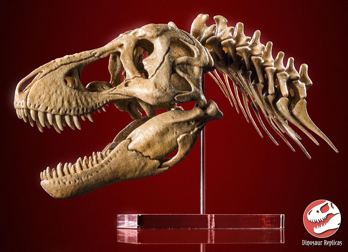 [Image: scale_model_tyrannosaurus_rex___skull_an...cnr7tu.jpg]