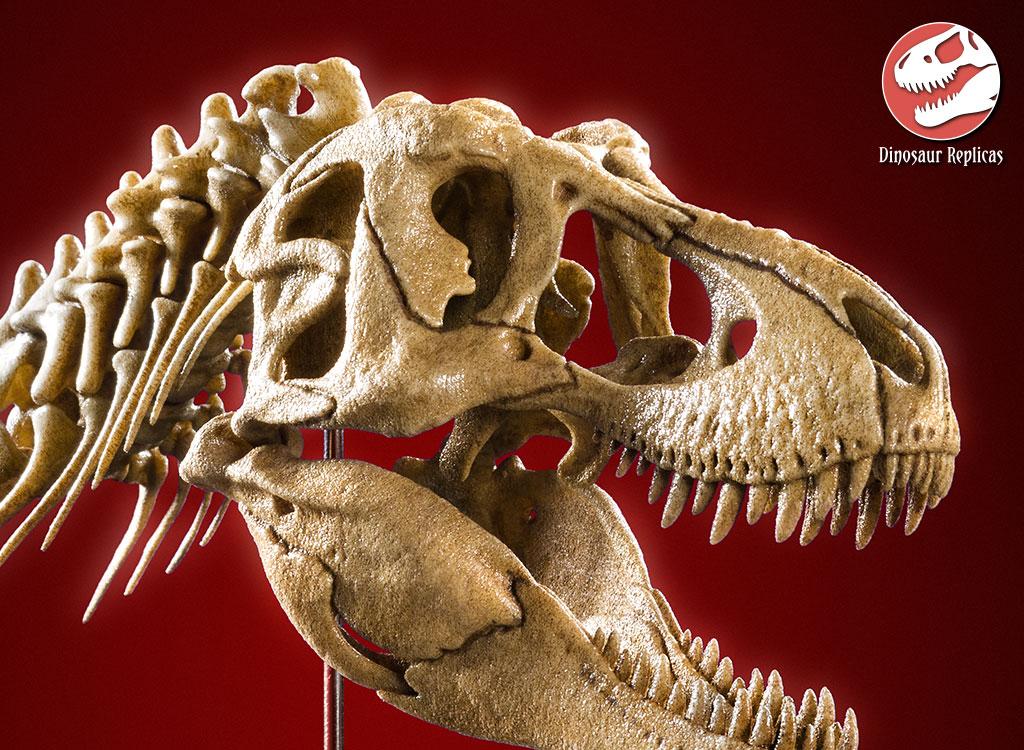 [Image: neckskull_rex_deviant_01b_by_strick67-dcnr8vb.jpg]