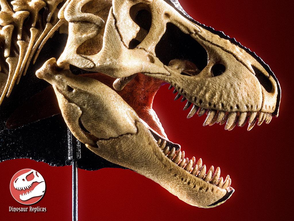 [Image: hh_bone_rex_photo_66b_by_strick67-dco2f7v.jpg]