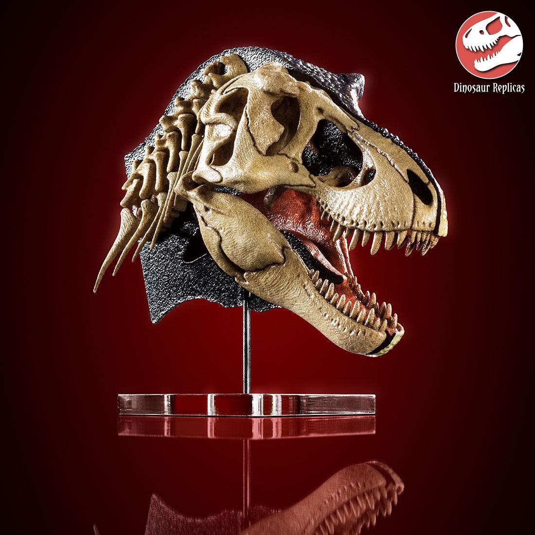 [Image: hh_bone_rex_photo_17a_by_strick67-dco2fud.jpg]