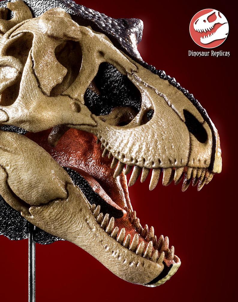 [Image: hh_bone_rex_photo_17b_by_strick67-dco2gai.jpg]