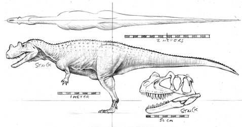 Ceratosaurus orthographic with skull