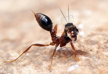 Ant-Bot by mylifeisdigital