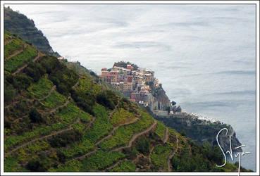Vinyards in Cinque Terre by axlar