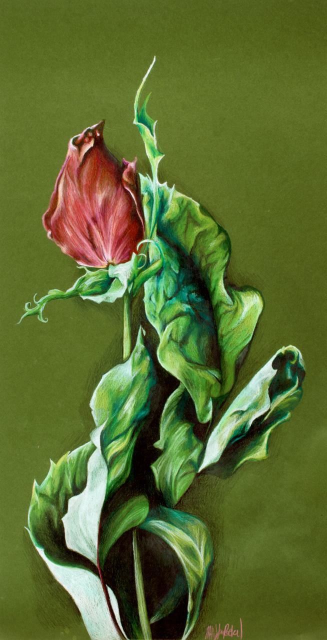 Rose Still Life by corelila