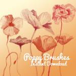 Poppy Brushes