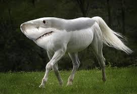 Shark Horse by Jellisa773
