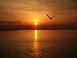 Flying towards the sun.