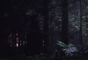 These Woods Breathe Evil_02 by Aderhine