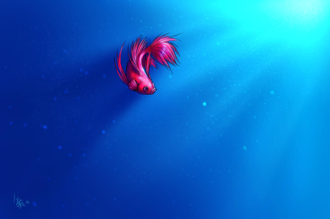 Siamese Fighting Fish - wallpaper thingy by oomizuao on ...