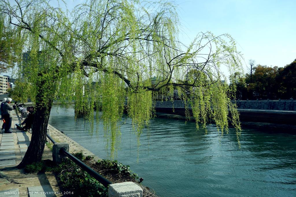 some pretty tree by oomizuao