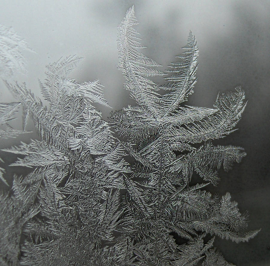 Frosted Window Fractal