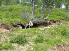 Sheep Cave by ChimeraDragonfang