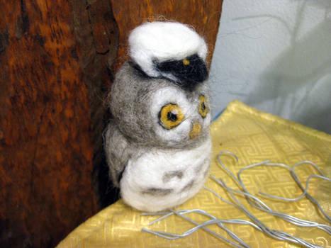Wise little owl