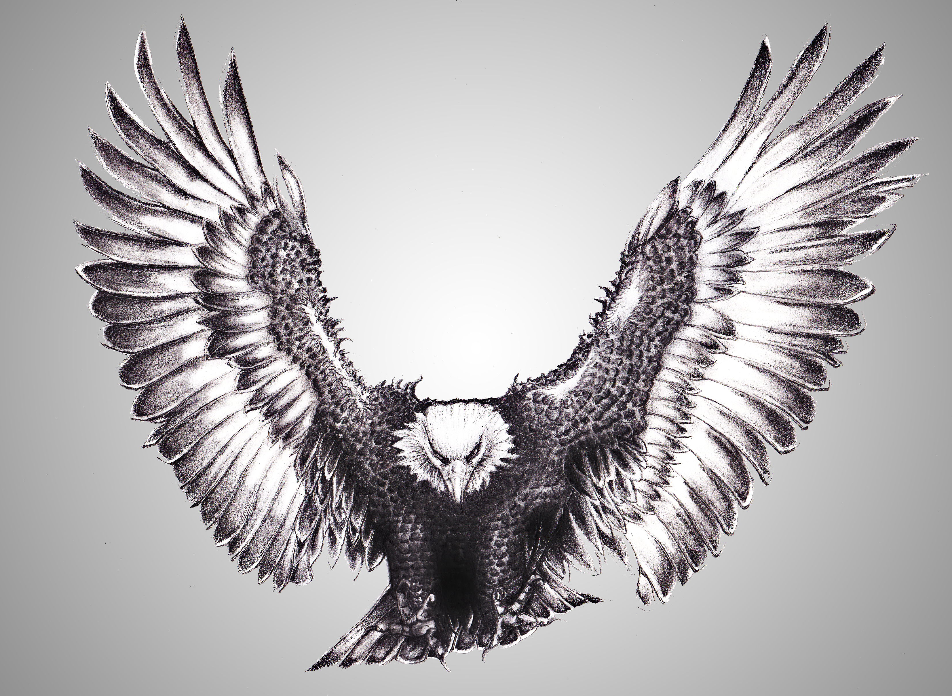 flying eagle drawings in pencil