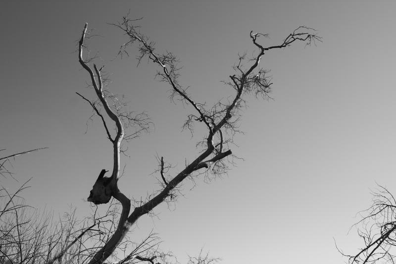 Alien Tree by ArtistsForCharity
