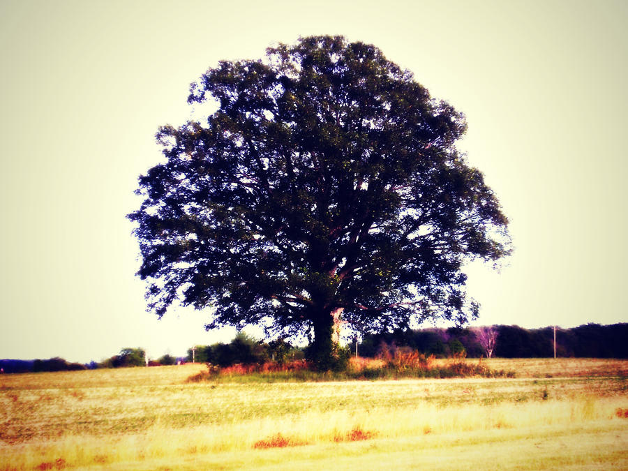 Tree of Life by callista777