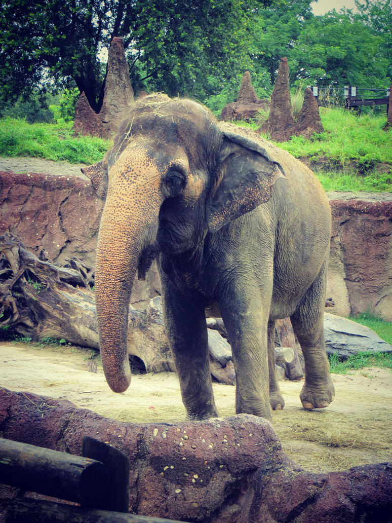 Elephant by callista777