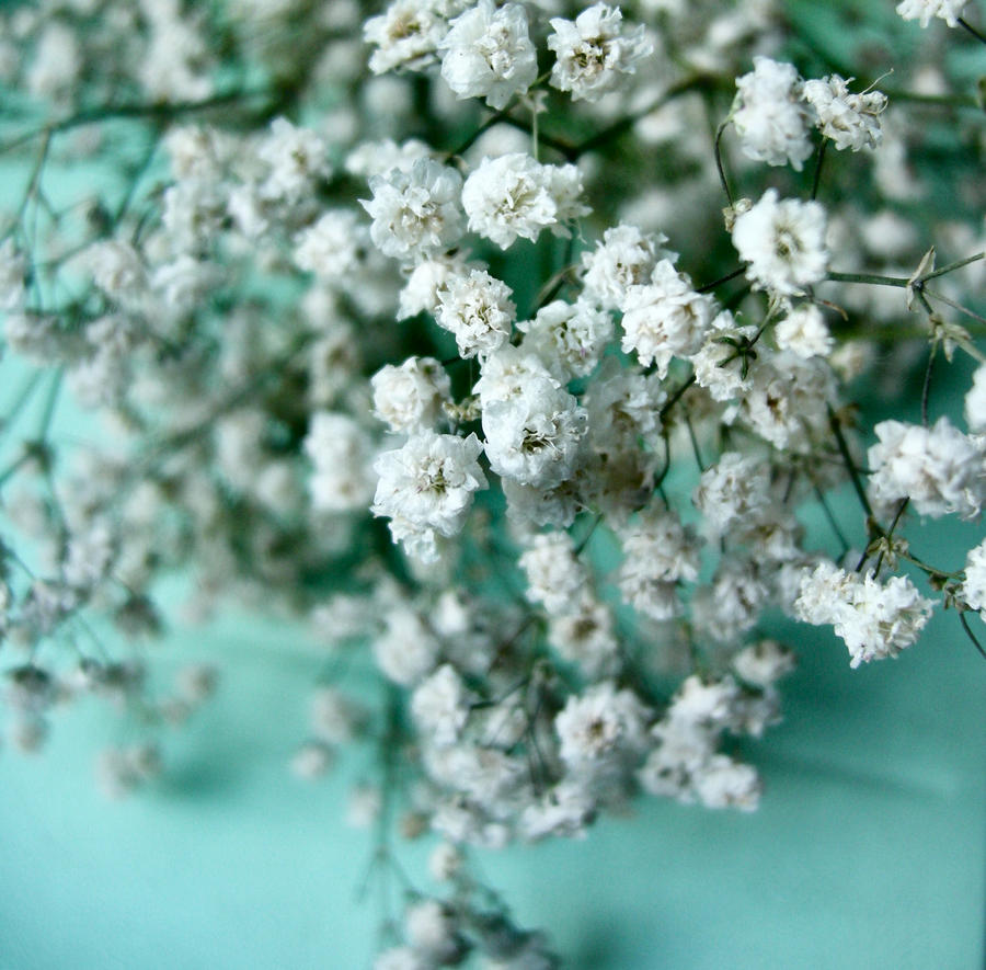 Little green e white flowers by erykucciola stock on deviantart little green e white flowers by erykucciola stock mightylinksfo