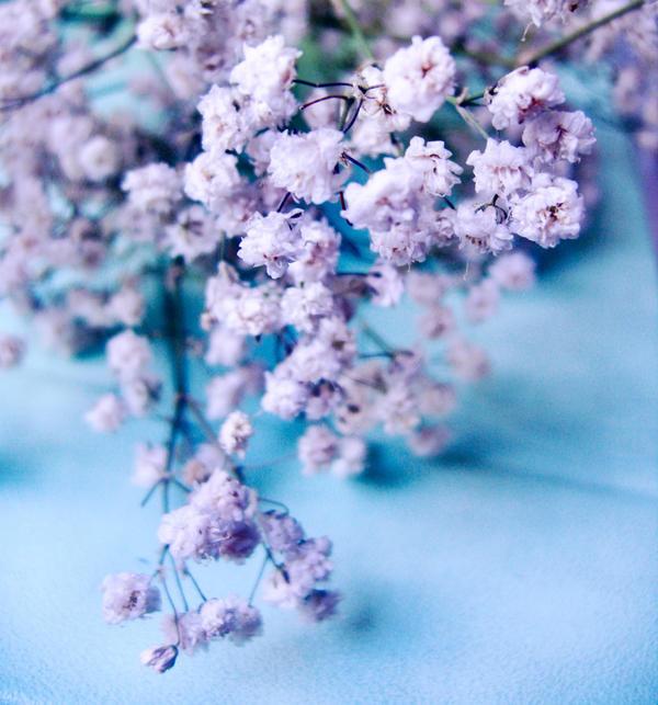 Little blue e white flowers by erykucciola stock on deviantart little blue e white flowers by erykucciola stock mightylinksfo