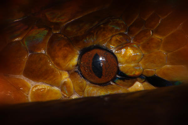 Reticulated Python 2 by S-H-Photography