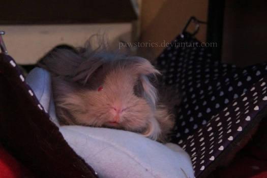 Little fluffy =D
