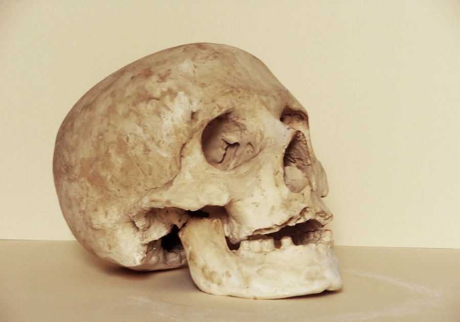 Skull anatomy study by el-lagarto on DeviantArt