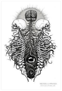 Medulla Spinalis