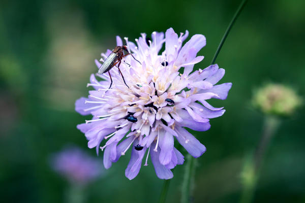 More insects than flower by AlexandraSophie