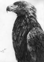 bird by DrUnKChIcKeN