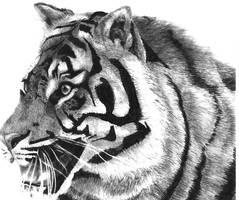 tiger by DrUnKChIcKeN