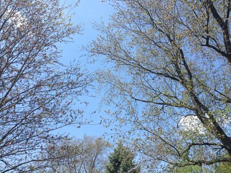 Spring At Last