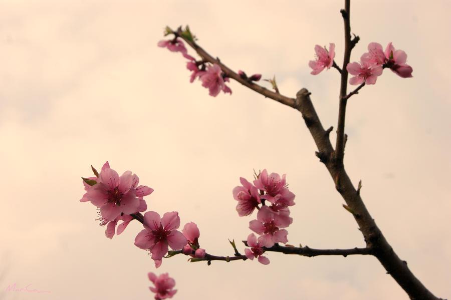 Peach Blossoms - Vintage by BpRos3 on DeviantArt