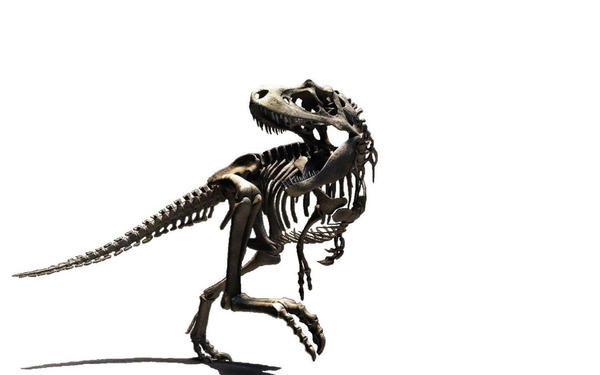 Large T-Rex Skeleton Wallpaper by tacostandwallpapers on