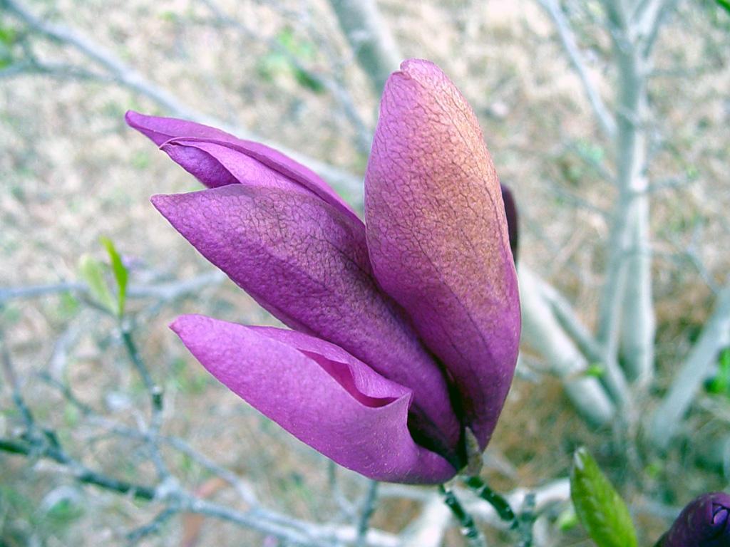 purpleflower2 by sirkus