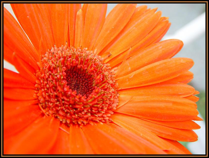 flower001 by sirkus
