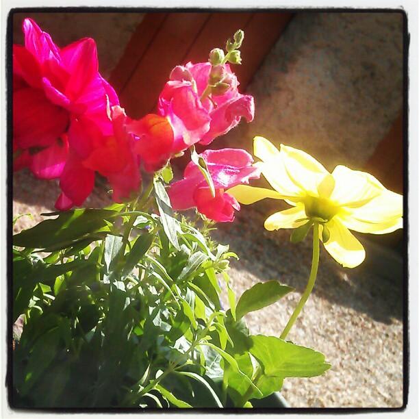 Flowers III by Mirhahil