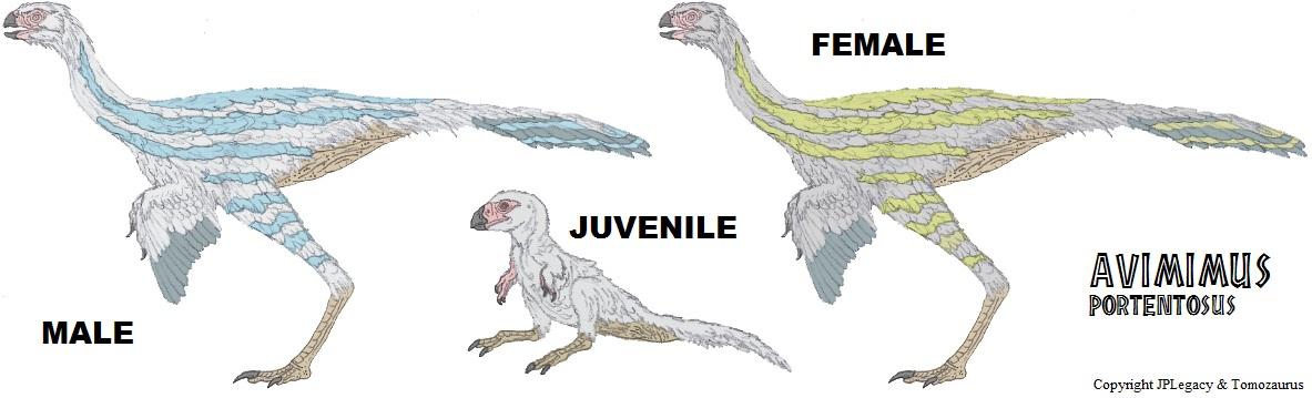 LtL Avimimus by Tomozaurus