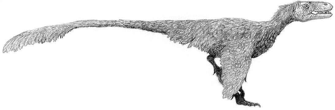 Dromaeosaurus albertensis by Tomozaurus