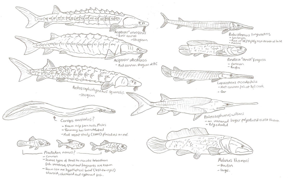 Hell Creek Ray-Finned Fish Sketch Dump by Tomozaurus