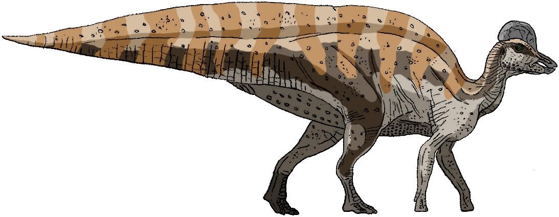 Magnapaulia laticaudus by Tomozaurus