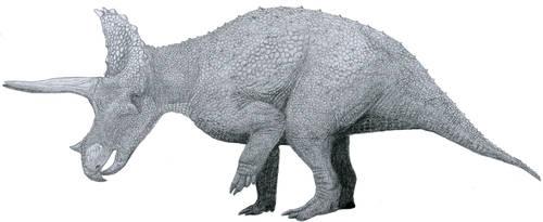 Three horns by Tomozaurus