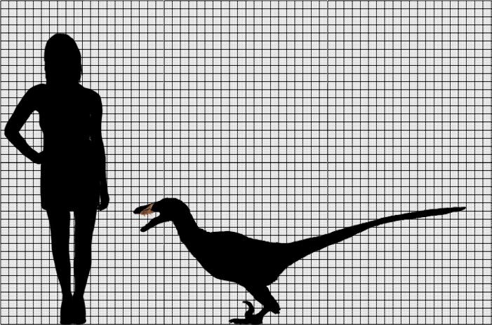 Acheroraptor scale by Tomozaurus