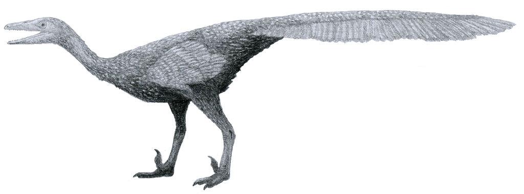 Sketchy Gobivenator (alt: I still hate tail fans) by Tomozaurus