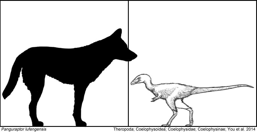 Panguraptor by Tomozaurus