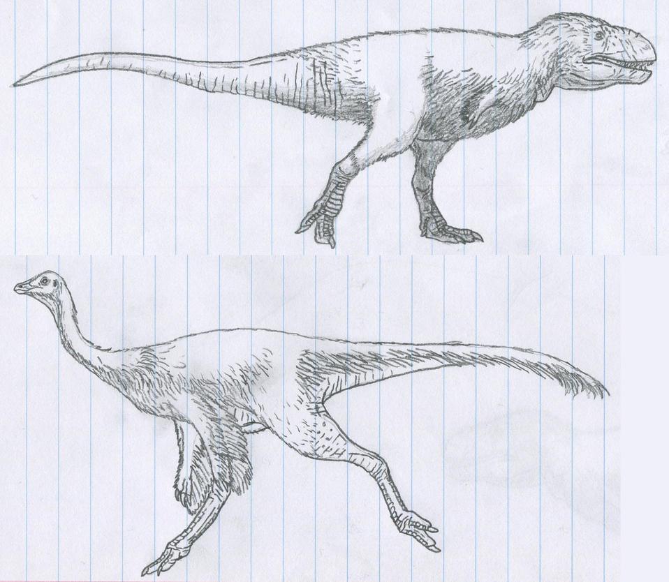 Tyrannoraptoran sketches by Tomozaurus