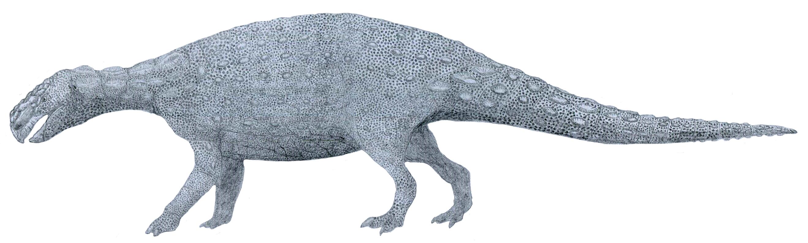 Ievers' Shield Saurian by Tomozaurus